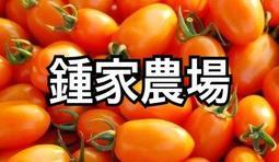 橙蜜香蕃茄 鍾家農場  小蕃茄 美濃特產 自產自銷 送禮自用