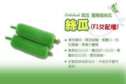 【振華育苗】F1一代交配種 絲瓜種子 (高產量、烹煮不黑) 菜瓜 短圓筒型