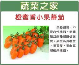 全館滿799免運【蔬菜之家00G73】大包裝.橙蜜香小蕃茄種子40顆