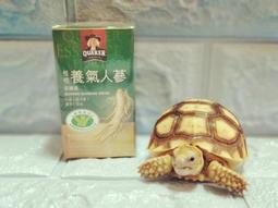 滋補聯盟【桂格~養氣人蔘(有糖)-60ml(單瓶$43元)】2021