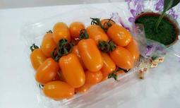 免運費/美濃冬季限量/橙蜜香小蕃茄禮盒/5斤裝379元/產地直送哦∼