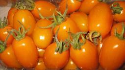 有吉園圃台灣安全蔬果認證~美濃橙蜜香小番茄一斤裝$109元~好吃一口接一口吃不停