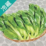 台灣長年菜1粒(500g±5%/粒)