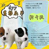 日單噓噓價》dyy業務用經濟包抗菌除臭尿布尿片共6包(再升級不滲透)