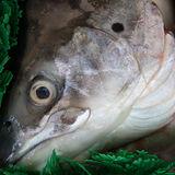 【寶島福利站】超新鮮~加拿大鮮嫩鮭魚頭對切2份共4片(900g/份)含運