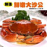 【秋蟹祭典】鮮活野生大沙公2隻(500~600g/隻)