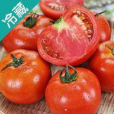 牛蕃茄1盒(500g±5%/粒)