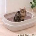 日本IRIS圓弧流線貓砂盆大‧NE-550
