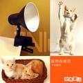 奇恩舖子【寵物保暖燈】CNE-13108古典喇叭夾燈黑色+300W調光線/不含燈泡