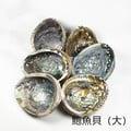 鮑魚貝殼~可用來燒白鼠尾草或放置您的水晶及寶貝們