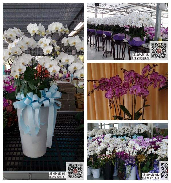 球型蘭花、各式喜慶、開幕用蝴蝶蘭專車送達免運費