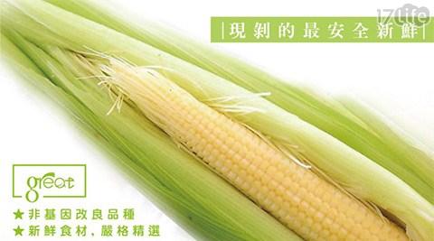 平均每斤最低只要29元起(含運)即可購得【鮮綠農產】嚴選爽脆帶葉水果玉米筍7斤/15斤/20斤/30斤/35斤。