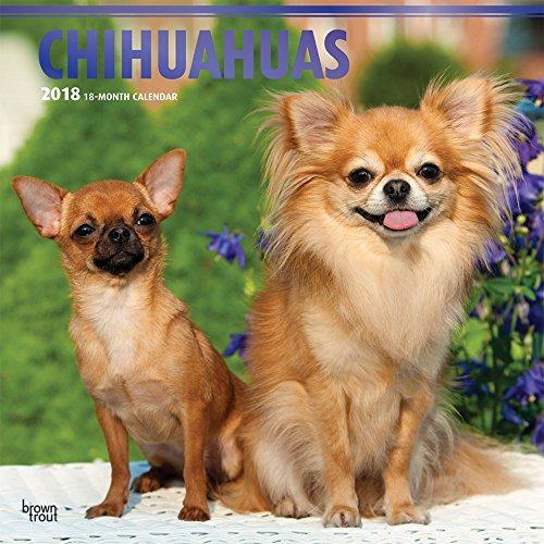 Chihuahuas 2018 Calendar(Wall)