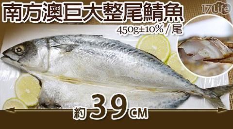平均最低只要54元起(含運)即可享有【日丸水產】南方澳巨大薄鹽整尾鯖魚(450g±10%/尾):6尾/12尾/20尾/40尾。