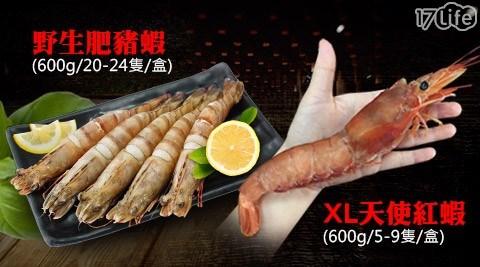 【築地一番鮮】XL巨無霸天使紅蝦/野生鮮Q肥豬蝦
