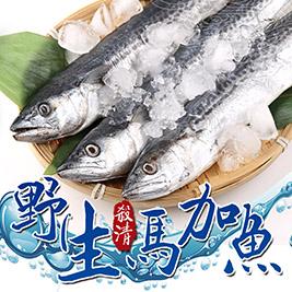 【愛上新鮮】野生殺清馬加魚