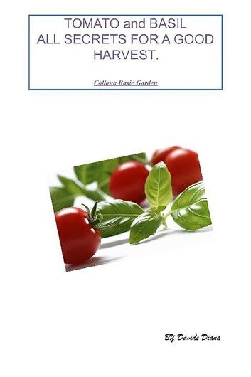 Tomato and basil: all secrets for a good harvest