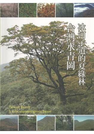 冰河孑遺的夏綠林─台灣水青岡