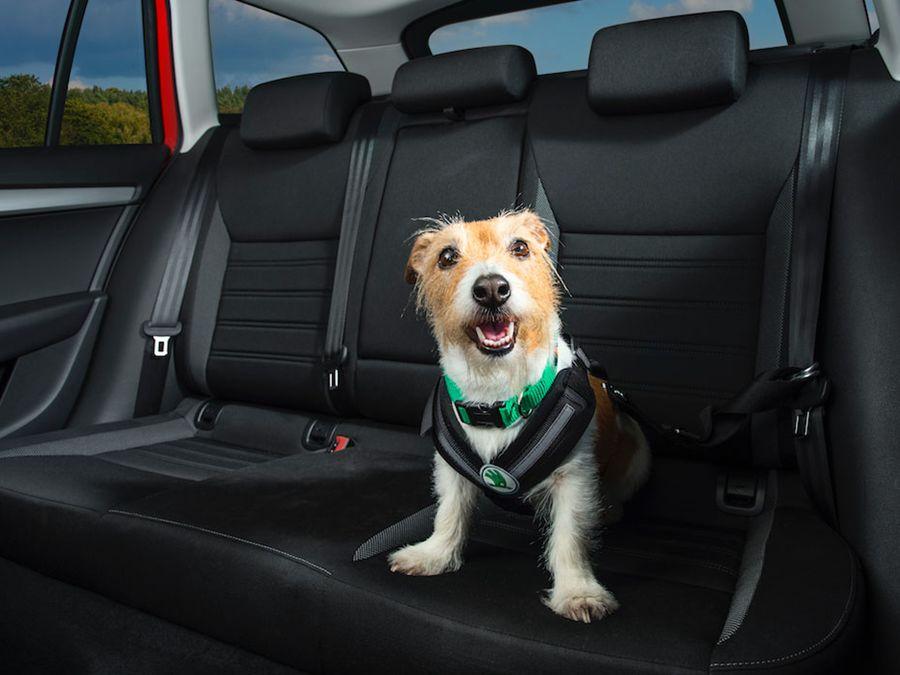 John Wick愛狗效應?美參議員提案修法保障破窗救狗人士